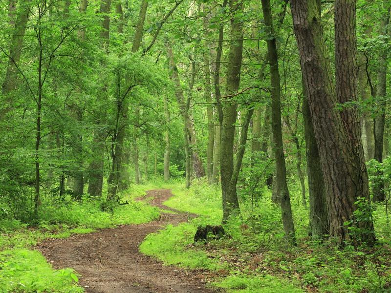 Forest and Woodland Strategy for Glasgow City Region