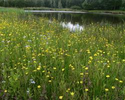 Robroyston Local Nature Reserve